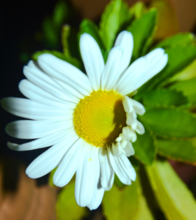 Daisy on my front porch