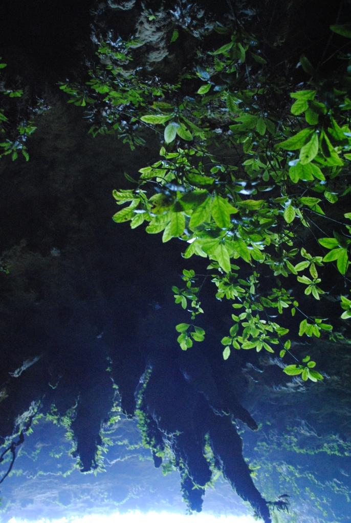 Green Cueva