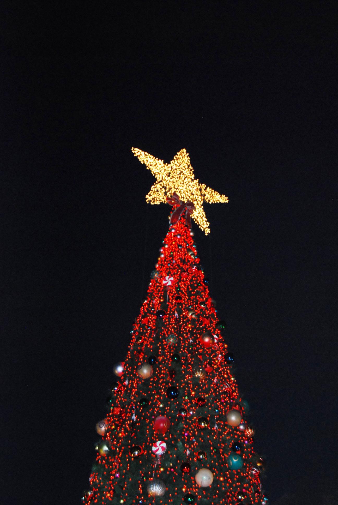 Big Star Tree