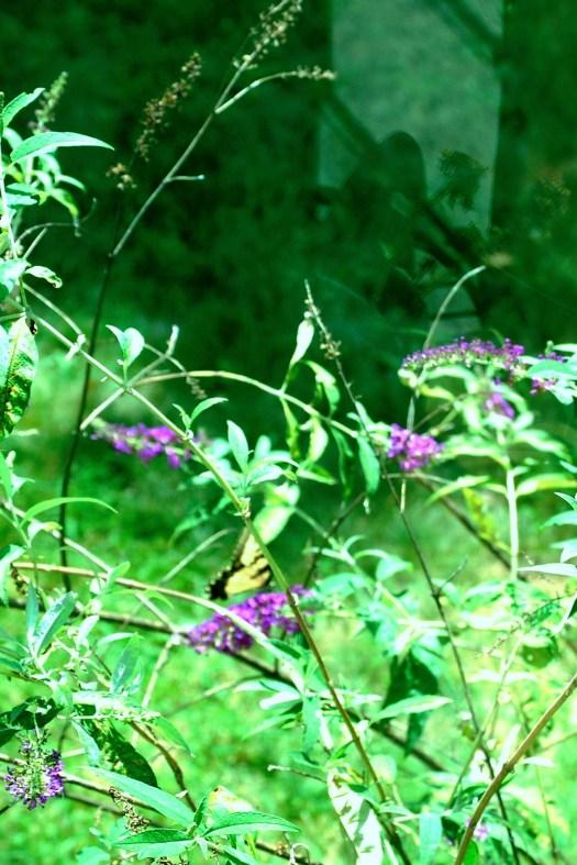 Butterfly Appears