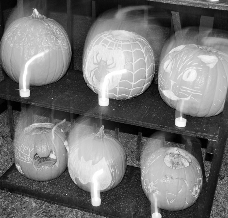 Six black and white Pumpkins